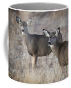 Mule Deer Does Coffee Mug