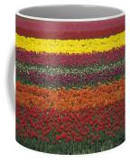 Mult-colored Tulip Field Coffee Mug
