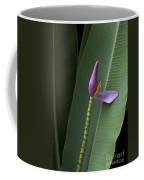 Musa Ornata - Pink Ornamental Banana Flower - Kepaniwai Maui Hawaii  Coffee Mug