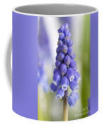 Muscari Or Grape Hyacinth Coffee Mug