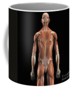 Muscles Of The Upper Body Rear Coffee Mug