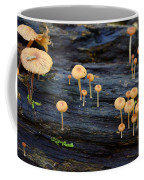 Mushrooms Amazon Jungle Brazil 4 Coffee Mug