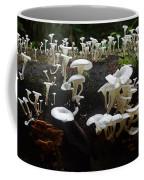 Mushrooms Amazon Jungle Brazil 5 Coffee Mug