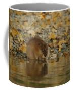 Muskrat Reflection Coffee Mug