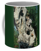 My Best Olive Tree Friend  Home Privat Spain Since 1999 Coffee Mug
