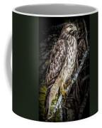 My Hawk Encounter Coffee Mug