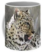 Naples Zoo - Leopard Relaxing 1 Coffee Mug