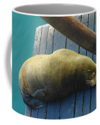 Napping Sea Lion Coffee Mug