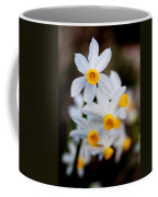 Narcissus Tazetta Coffee Mug