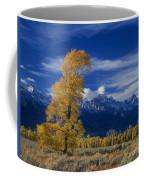 Narrowleaf Cottonwoods Fall Color Teton Coffee Mug