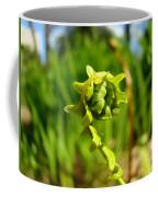 Nature Green Fern Frond Unfolding Art Prints Ferns Coffee Mug