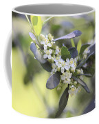 Nature Path Flower Coffee Mug