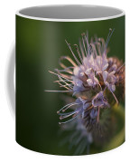 Natures Treasures Coffee Mug