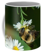 Nectar Collecting Drone Fly  Coffee Mug