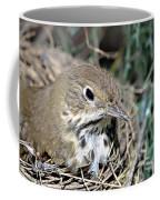 Nest In A Tree Coffee Mug