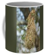 Nest Of Altamira Oriole Icterus Gularis Coffee Mug