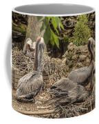 Nesting Brown Pelicans Coffee Mug