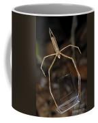 Net-casting Spider Coffee Mug