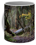 New Growth In An Old Forest Coffee Mug