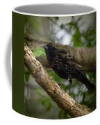 Red Winged Blackbird - New Heights - 06.04.2014 Coffee Mug