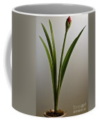 An Emerging Amaryllis Coffee Mug