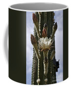 New Photographic Art Print For Sale White Cactus Flower Coffee Mug