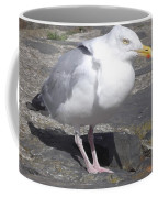New Quay Gull 1 Coffee Mug