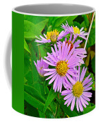 New York Asters In Flower's Cove-newfoundland Coffee Mug