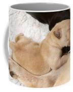 Newborn Labrador Puppy Suckling Coffee Mug