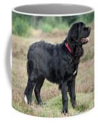 Newfoundland Dog, Standing In Field Coffee Mug