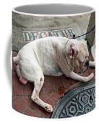 Newsworthy Dog In French Quarter Coffee Mug