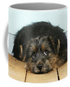 Norfolk Terrier Puppy Coffee Mug