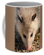 North American Opossum In Winter Coffee Mug