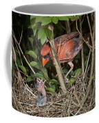 Northern Cardinal At Nest Coffee Mug