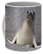 Northern Elephant Seal Weaner Coffee Mug