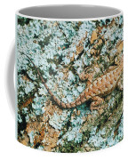 Northern Fence Lizard Coffee Mug