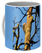 Northern Flicker At Sunrise Coffee Mug