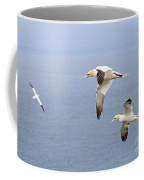 Northern Gannets In Flight Coffee Mug