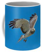 Northern Harrier Male In Flight Coffee Mug