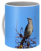 Northern Mockingbird IIi Coffee Mug