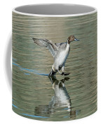 Northern Pintail Drake Tail Touching Coffee Mug