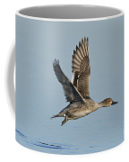Northern Pintail Hen Coffee Mug