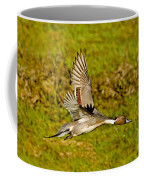 Northern Pintail In Flight Coffee Mug