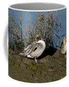 Northern Pintail Pair At Rest Coffee Mug