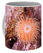 Northern Red Anemone Coffee Mug