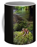 Northern Red-legged Frog Coffee Mug