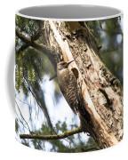Northern Red Shafted Flicker Coffee Mug