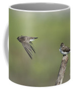 Northern Rough-winged Swallows Coffee Mug