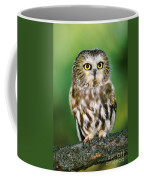 Northern Saw-whet Owl Aegolius Acadicus Wildlife Rescue Coffee Mug