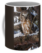 Northern Saw-whet Owl.. Coffee Mug